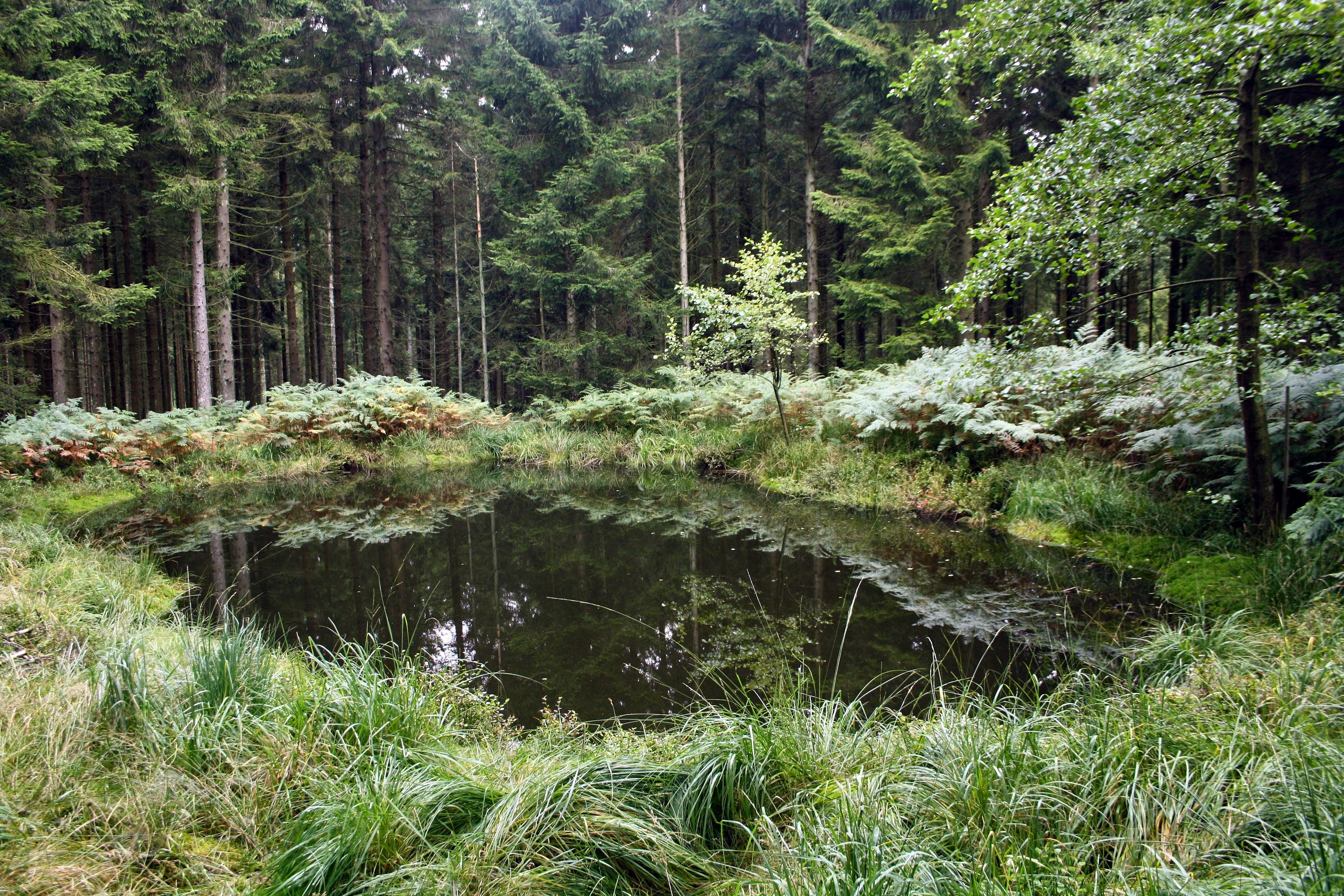 Etang forme dans un trou d obus dans l hertogenwald for Bache pour etang belgique