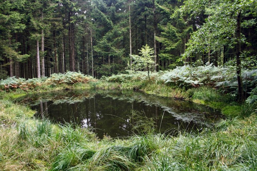 Etang forme dans un trou d obus dans l hertogenwald for Bache etang belgique